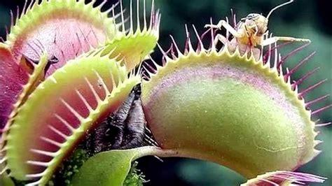 Las 5 plantas carnívoras más bellas del mundo - YouTube