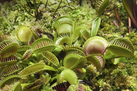 Las 5 plantas carnívoras más hermosas del mundo - Batanga