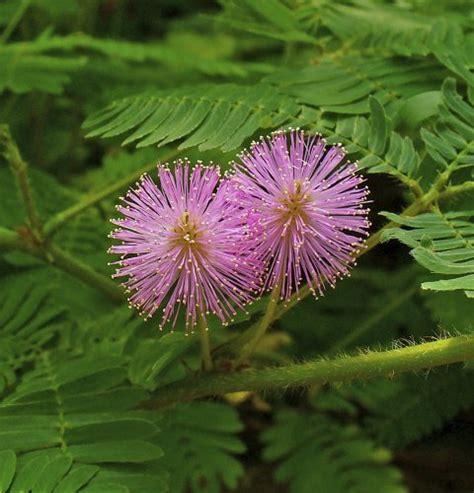 Las 5 plantas más raras del mundo : ProYungas
