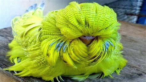 Las 9 aves más exóticas del mundo   YouTube