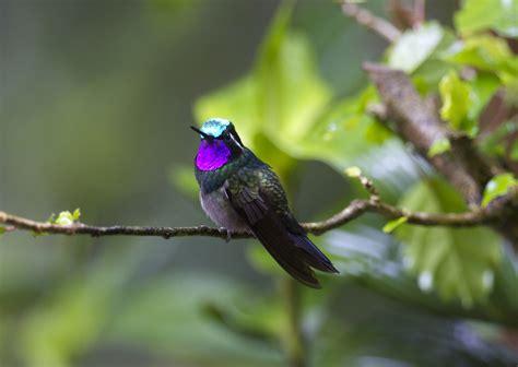 Las aves de Costa Rica  Enero 2015    Gorka Gorospe