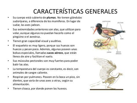 Las aves de mi colegio
