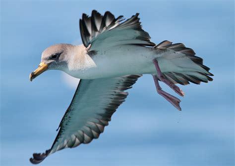Las aves marinas huelen su camino a casa   Vista al Mar ...