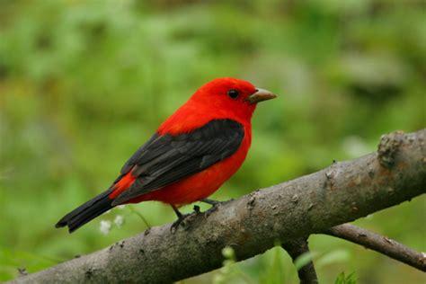 Las aves más bellas del mundo   Informacion sobre animales