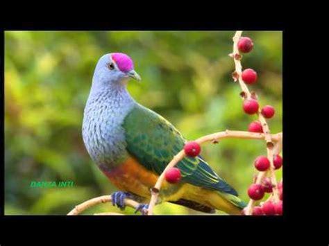 Las aves mas bonitas del planeta  MEGAPOST    Imágenes ...