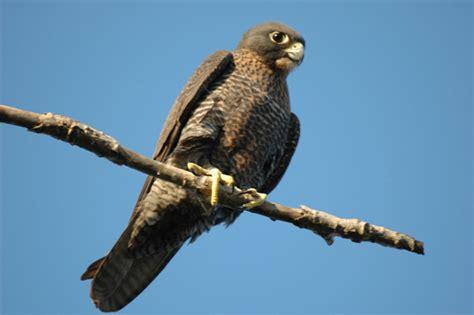 Las Aves mas peligrosas del mundo! Top 9 - Info - Taringa!