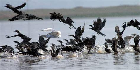 Las aves migratorias han cambiado sus rutas y rutinas de ...