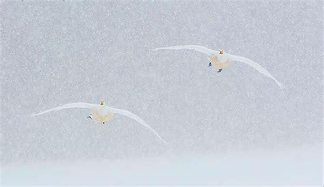 Las aves migratorias protagonistas del concurso FotoAves ...