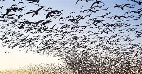 Las aves migratorias ya no cruzan el Estrecho de Gibraltar
