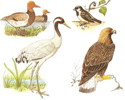 Las aves, naturales, Ciencias Naturales de Aplicaciones ...