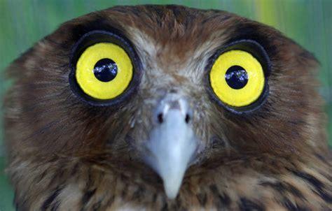 Las aves nocturnas  comen por los ojos    RTVE.es