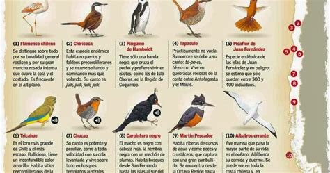 Las Aves que Viven en Chile: Los Nombres de las Aves que ...