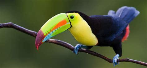 Las aves, un bioindicador de la calidad de vida del ser ...