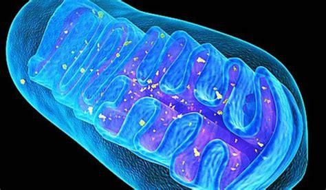Las baterías de las células resultan fundamentales en el ...