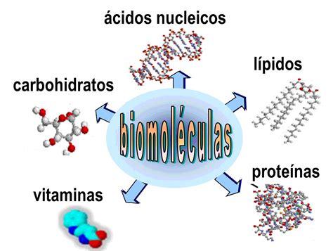 Las Biomoleculas.