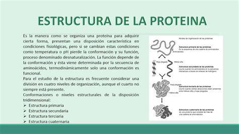 Las biomoleculas organicas (carbohidratos, lipidos ...