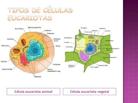 Las células humanas