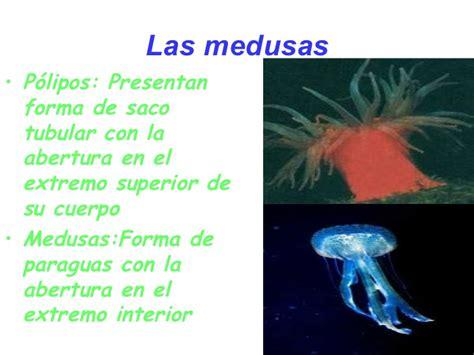 Las esponjas y las medusas