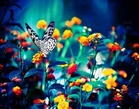Las Fotos Mas Alucinantes: mariposa y flores