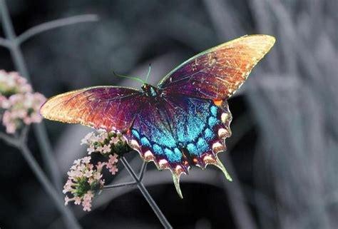 Las Fotos Mas Alucinantes: mariposas preciosas