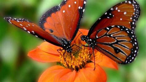Las mariposas más bellas del mundo - YouTube