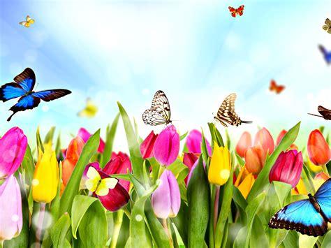 Las Mariposas y sus creencias para la buena suerte   Elena ...
