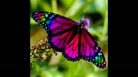 las mas lindas mariposas de colores - YouTube