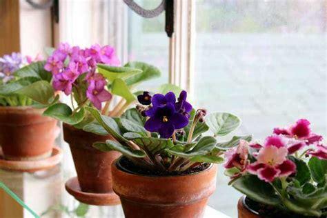 Las más lindas Plantas de interior con flor