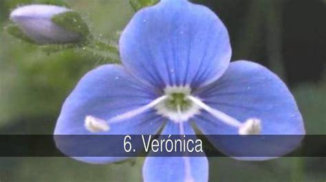 Las mejores curiosidades: flores con nombre de mujer y su ...