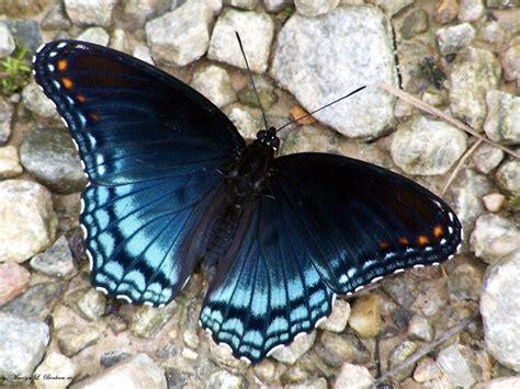 Las mejores fotos de mariposas 2018   Haciendofotos.com