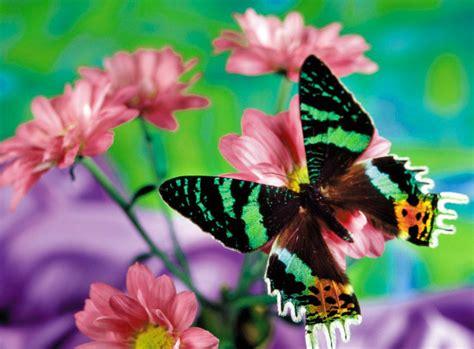 Las Mejores Fotos De Mariposas Bonitas | Imagenes De Mariposas