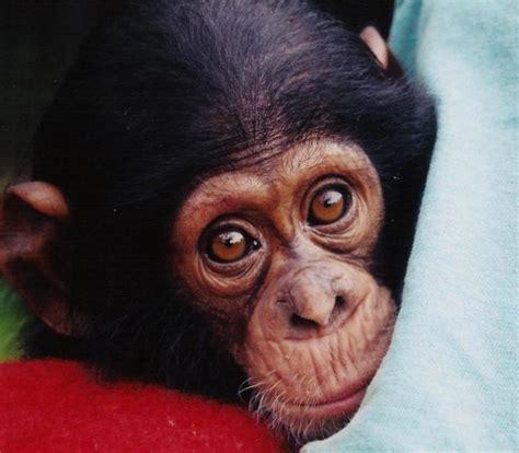 Las mejores FOTOS DE MONOS 【 Imágenes de simios