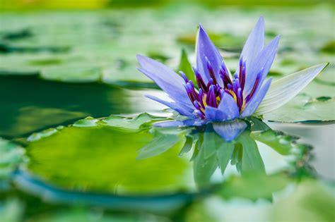 Las mejores plantas acuáticas para acuarios y estanques ...