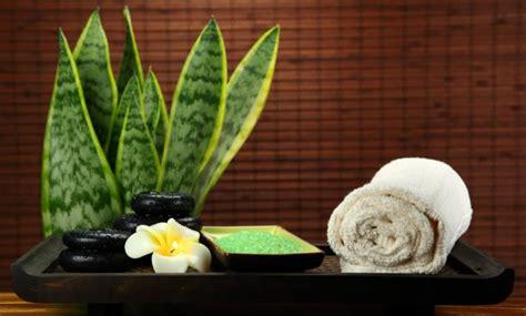 Las mejores plantas para el baño según el Feng Shui - IMujer