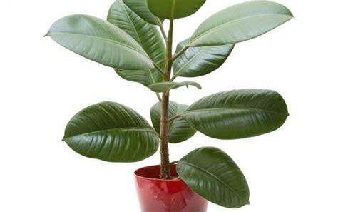 Las mejores plantas para renovar la energía positiva en el ...