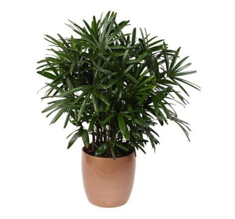 Las mejores plantas purificadoras de interiores   unComo