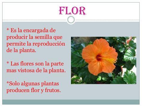 Las partes de la plantas. para alumnos de 3º grado de primaria