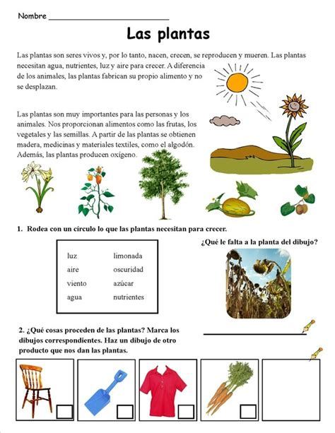 Las plantas (2) | Continguts PLANTES Primària | Pinterest