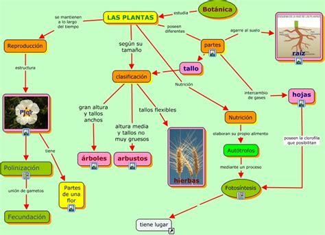 Las Plantas   Características