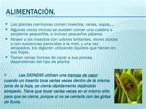 Las Plantas CarníVoras Marina