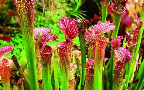 Las plantas carnívoras más hermosas del mundo   Taringa!