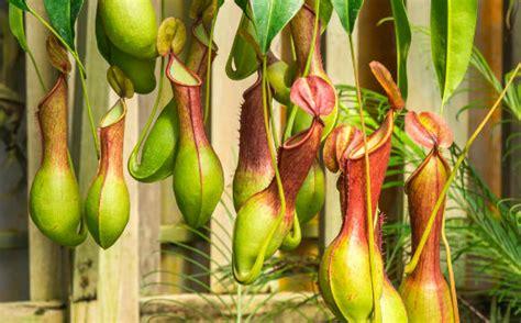 Las Plantas Carnivoras Related Keywords & Suggestions ...