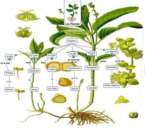 Las plantas cmap   ¿Cuales son los organos de las plantas?