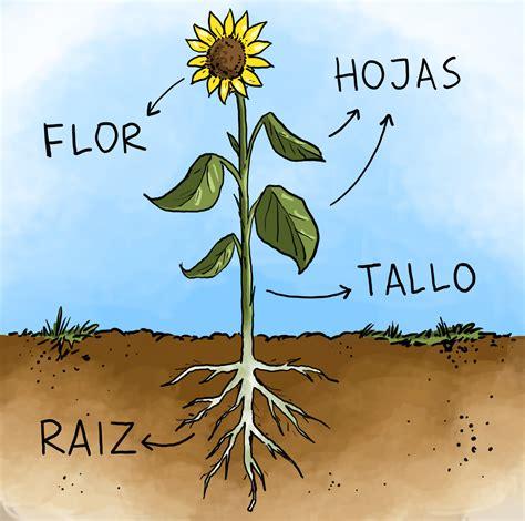Las plantas | Contenidos educativos digitales
