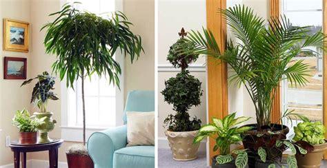 Las Plantas en el Feng Shui - Feng Shui con Leyda Ramírez