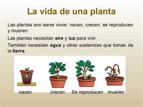 Las plantas en primero de Primaria