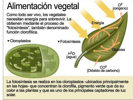 Las plantas Icarito