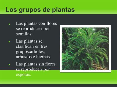 Las plantas Las plantas. La nutrición de las plantas ...