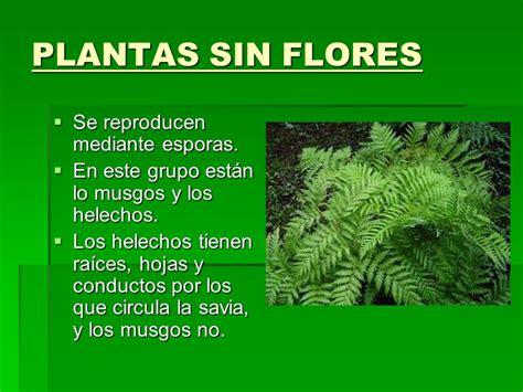 LAS PLANTAS LAS PLANTAS Lucía Galán Torija 5ºA LUCÍA GALÁN ...