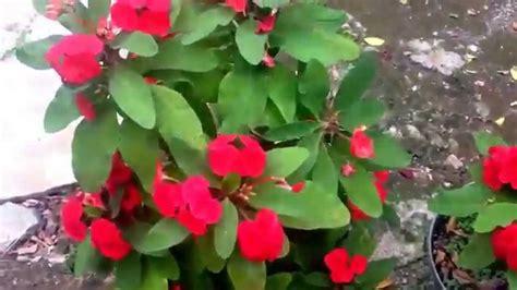 Las plantas mas hermosas del mundo - YouTube